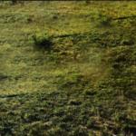 【動画解説】CGパースでリアルな草原にレタッチする方法